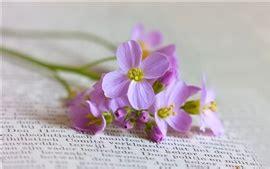 libro footpath flowers flores rosadas del indo camino 225 rboles hermosos paisajes fondos de pantalla 2560x1600