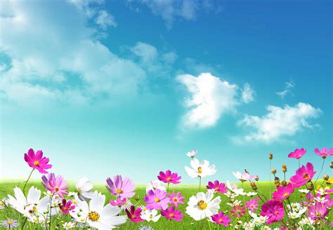 windows background themes spring spring desktop backgrounds wallpapers wallpaper cave