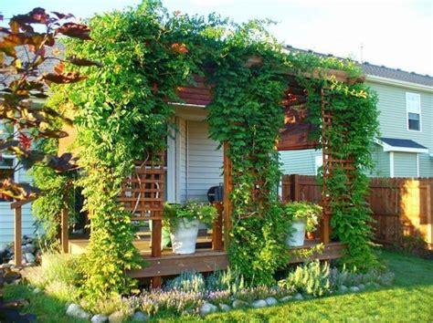 climbing plants giving unique character  exterior walls