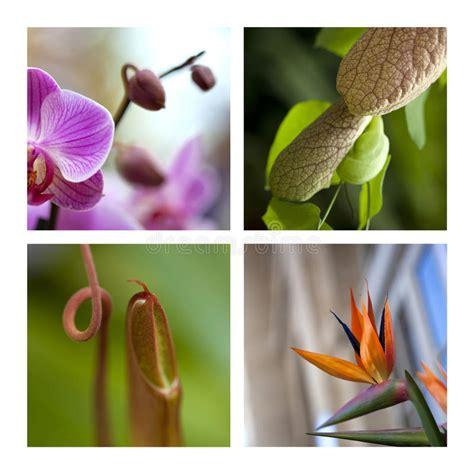 fiori esotici foto piante e fiori esotici immagine stock immagine di collage
