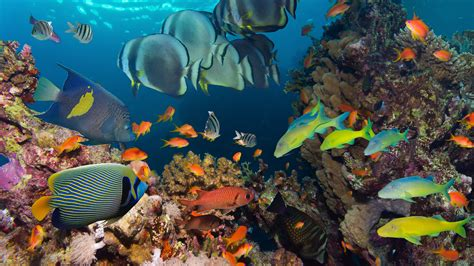 underwater tropical reef fish colorful coral wallpaper hd wallpapers13