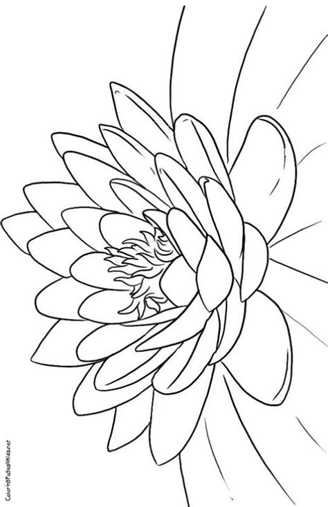 lotus designs coloring pages 17 images about lotus on pinterest dovers free