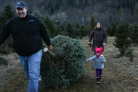 collections of nh vt christmas tree association easy