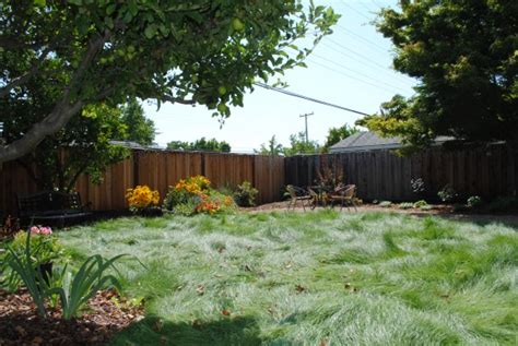 water wise drought tolerant yard