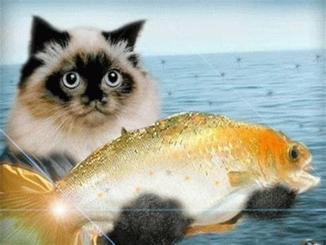funny cats: gold fish