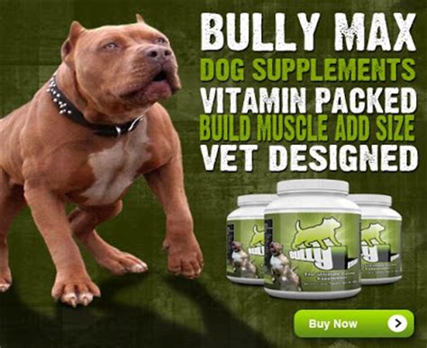 how to build on a pitbull puppy how to bulk up your pit bull and add fast