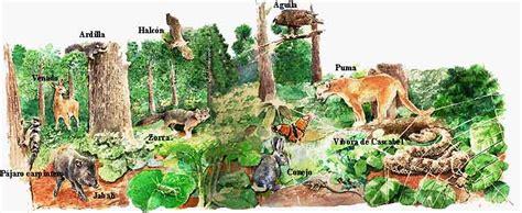 imagenes animales que viven en el bosque fauna del bosque imagui