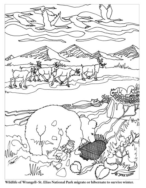 coloring pages of animals that migrate 13 best images of where do animals hibernate worksheet