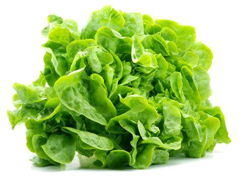 is lettuce bad for dogs image gallery lettuce vegetable