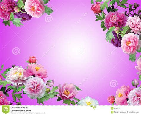 coplas de rosas y con dibujo blom pinky isolerad orchid f 246 r blommor ram arkivbilder