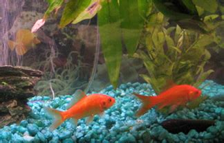 populating your [fish] tank clever dude personal finance