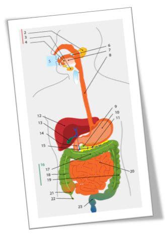 materi biologi makanan  sistem pencernaan