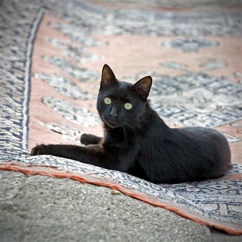 cat on rug black cat on a rug photograph by glennis siverson