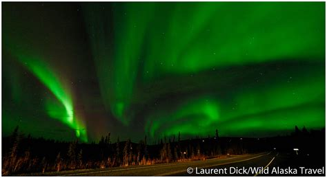 northern lights alaska time of year wild alaska travel alaska polar bear northern lights