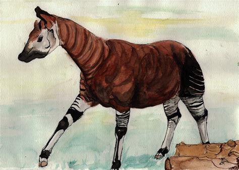 okapi drawing