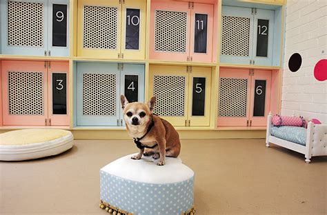 nature picture selection dog hotel