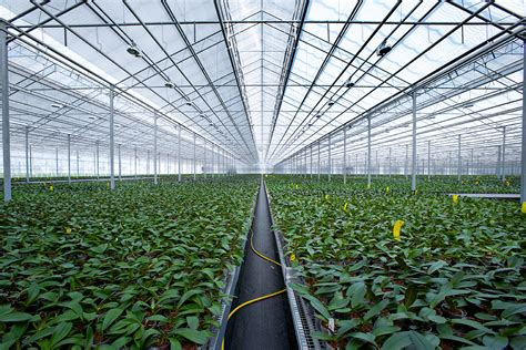 bedding  indoor plant greenhouse projects prins usa