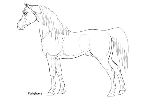 horse coloring pages arabian horse coloring pages shire