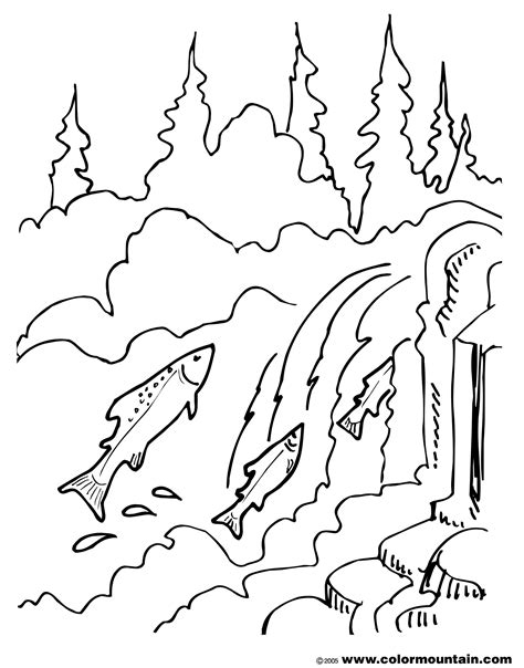 images printable coloring pages salmon coloring pages printable coloring book printable