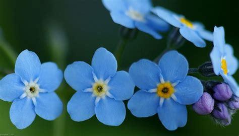 fondos de escritorio bonitos interesantes y bonitos fondos de escritorio de flores