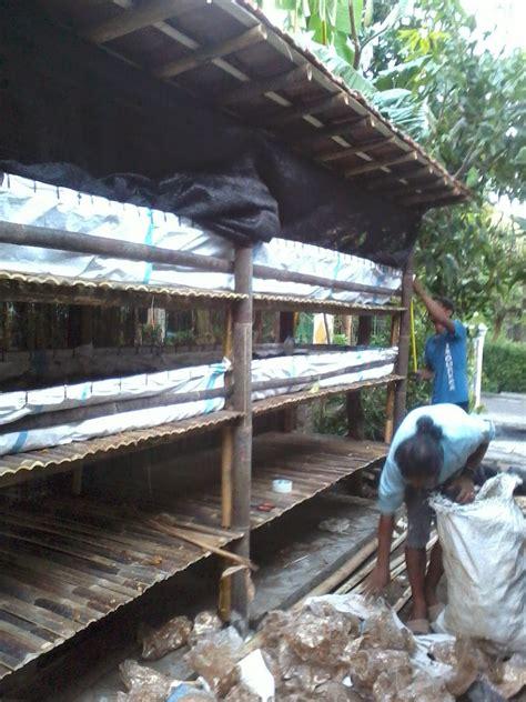 Budidaya Cacing Yogyakarta pusat penjualan cacing lumbricus rubellus di sragen