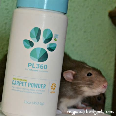 I Didnt Even Er Pet Pet Pet Product 7 by And Safe Pet Products From Pl360 Pawsitively Pets
