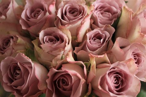 %name Colored Roses   Rose Flowers
