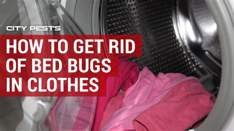 Do Bug Zappers Kill Bed Bugs
