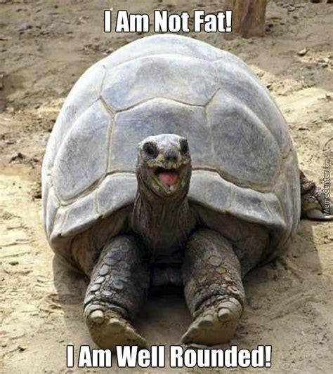 Tortoise Meme - offended tortoise fat by douglasdegraw meme center