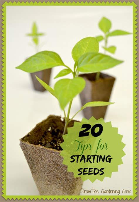 Cooks Garden Seeds by Seed Starting Tips 20 Ideas From The Gardening Cook