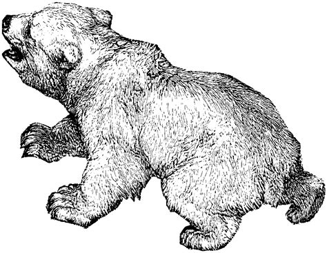 spectacled bear coloring page free coloring pages of spectacled bear