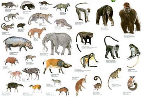 animal zoo life mammalsendangered mammals listlist  mammalsmammals factsmarine mammals