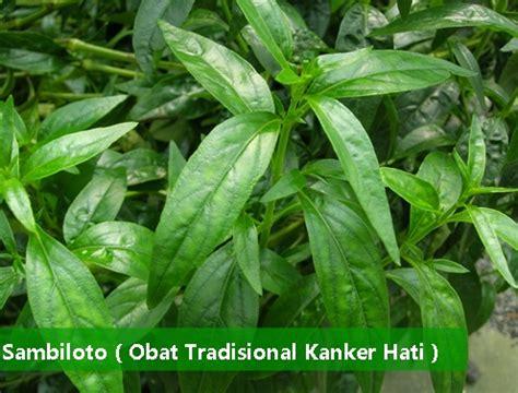 Penyembuhan Kanker Hati Herbal Alami Herbal Essence tanaman obat tradisional kanker hati manjur tanpa efek sing