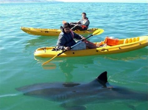 boat accessories durban shark with kayak kayak sa kayaks and fishing kayak