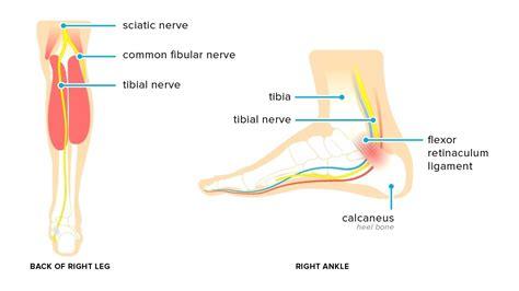 foot diagnosis diagram diagram top of foot diagram