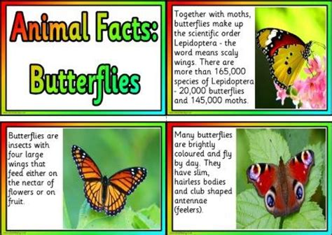 printable animal fun facts free printable animal facts posters butterflies