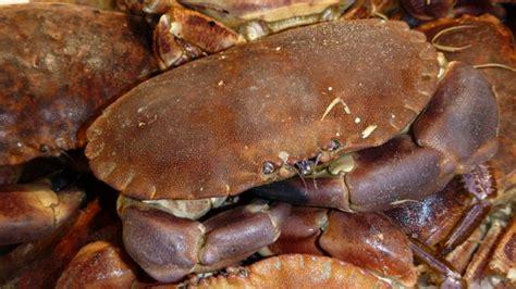 cuisson crabe dormeur greta garbure