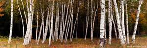 birches shelburne hampshire bilodeau photography