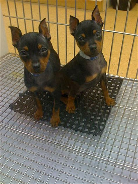 pet store to buy puppies 8 reasons not to buy pet store puppies reflections