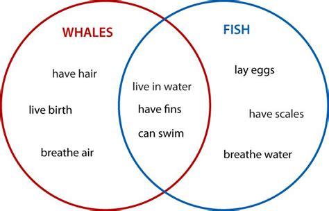 create venn diagram worksheets venn diagrams animals