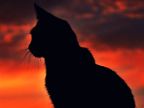 cat wallpaper pack black cat wallpaper collection for free download
