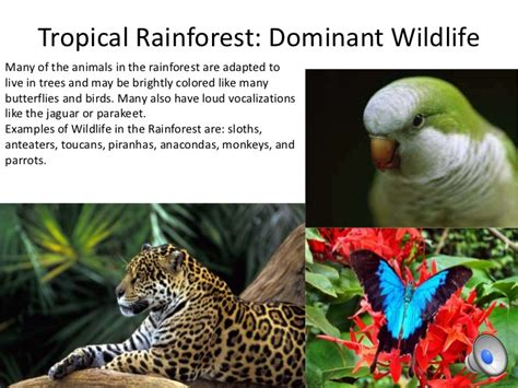 dominant plants in tropical rainforest 10 biomes