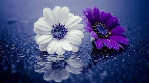 white  purple flower  glass  water drizzle hd