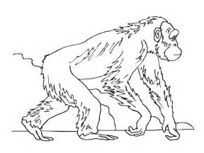 realistic coloring pages apes coloring pages realistic realistic coloring pages
