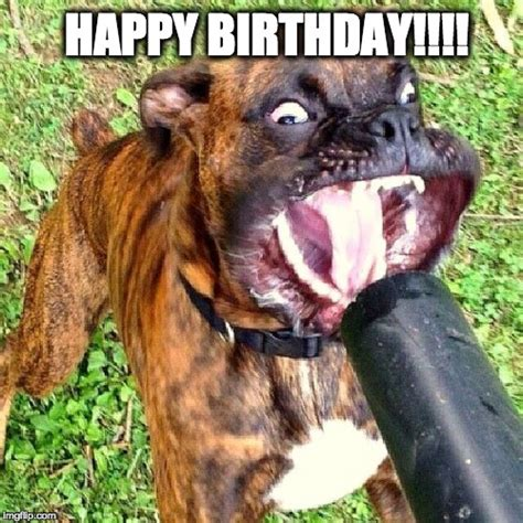 Puppy Birthday Meme - happy birthday imgflip