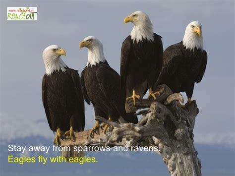 the 7 principles of an eagle