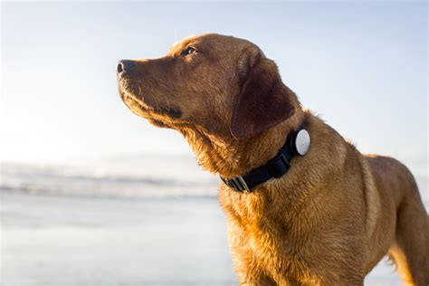 fit bit for dogs whistle s fitbit for dogs acquired by mars petcare techcrunch