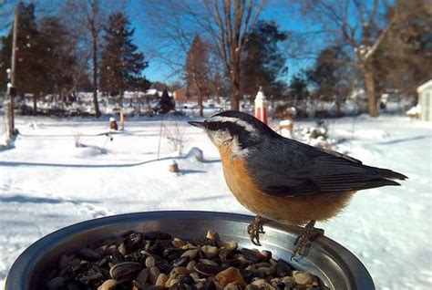 michigan backyard birds pose for motion activated