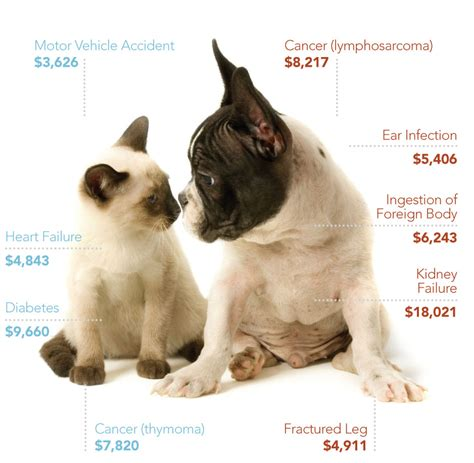 pet insurance cost    dog  cat insurance