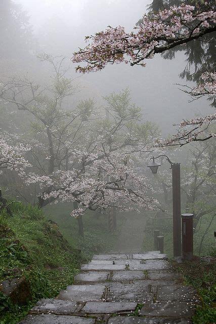 jardines zen fotos
